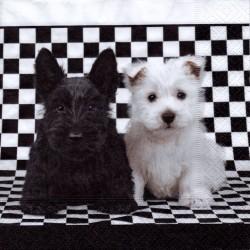 Čierny a biely