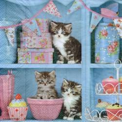 Mačky na polici