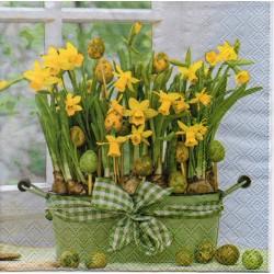 Narcisy v kvetináči