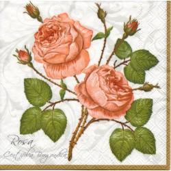 Ruže pink