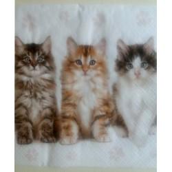 Tri mačiatka