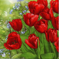 Červené tulipány na lúke