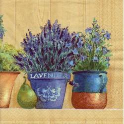 Levandula a bylinky v kvetináčoch